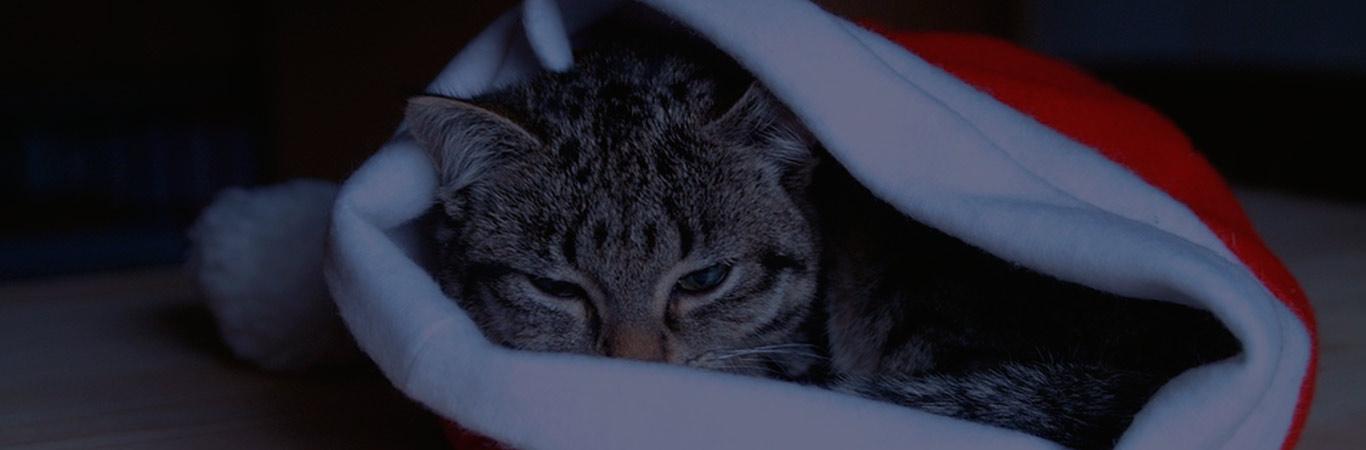accesorios-para-gatos