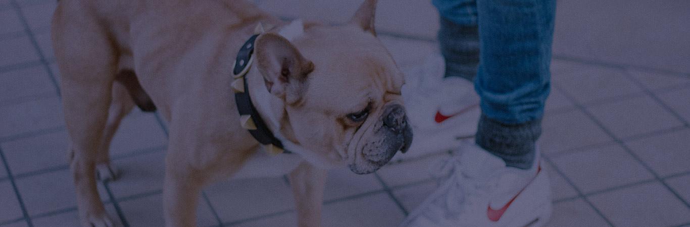 accesorios-para-perros