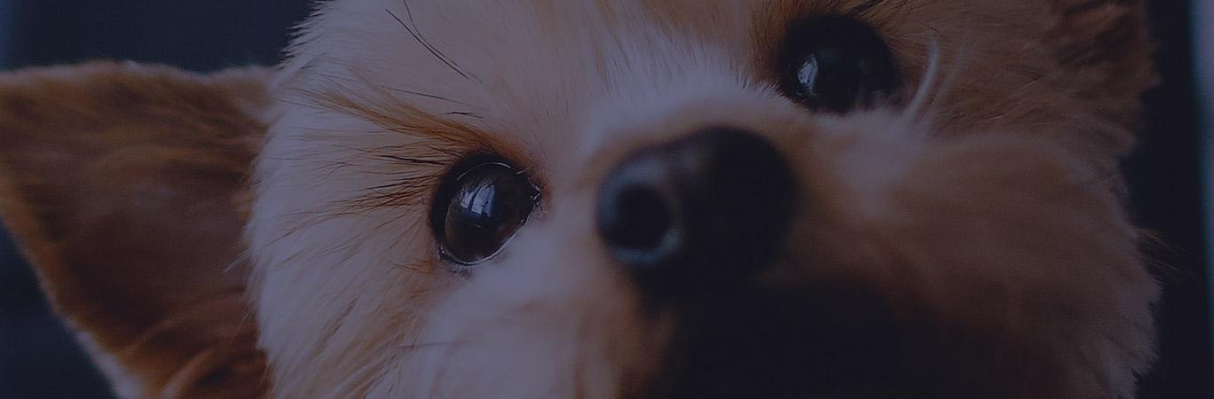 accesorios-para-cachorros