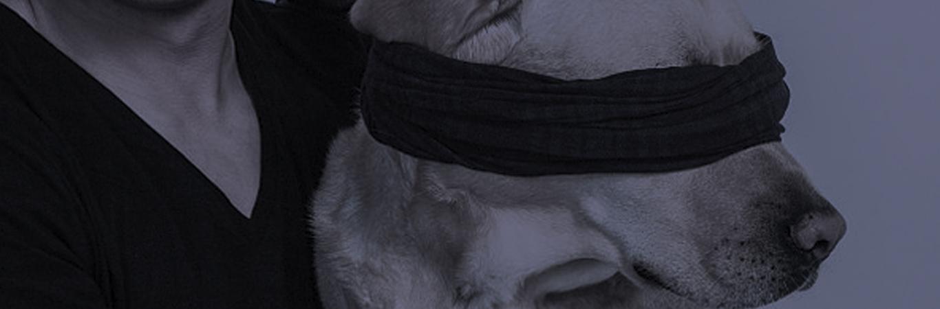perros-lazarillo