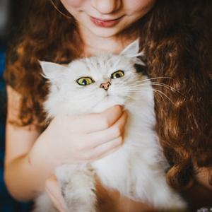 para-gatos-nombres