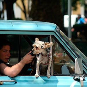 viajar-perros