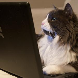 tienda-online-de-mascotas