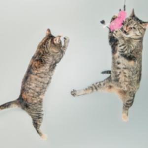 para-gatos-juegos
